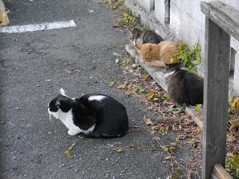 細い板に乗ってる仔猫たち3