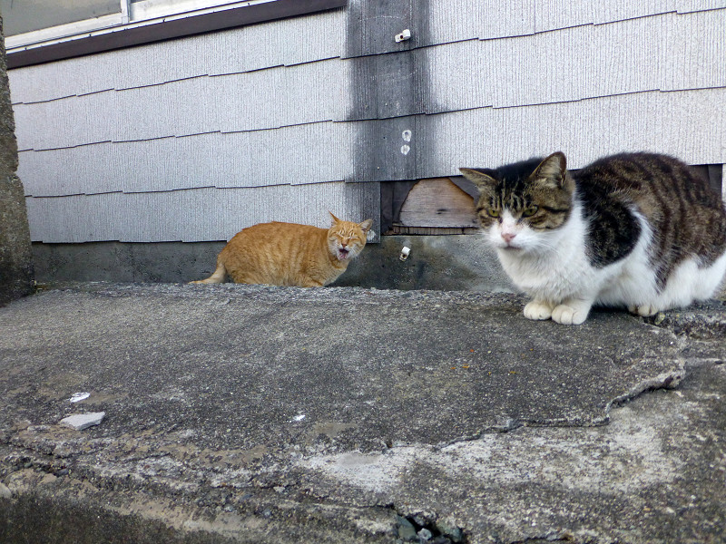 遠近法の猫たち