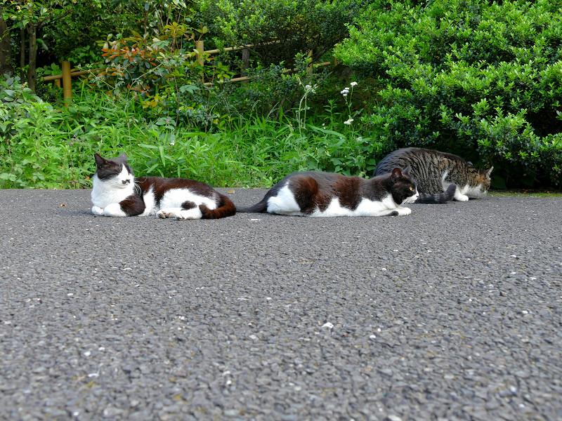 必死な猫と無関心な猫1