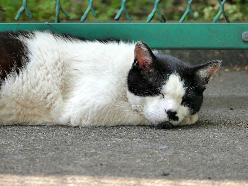 金網の前で手枕して寝ている白黒猫2