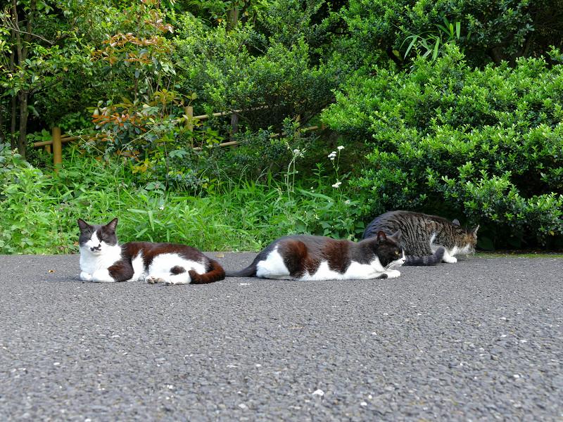 必死な猫と無関心な猫2