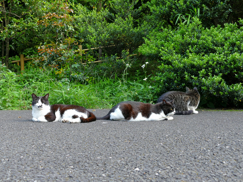 必死な猫と無関心な猫3