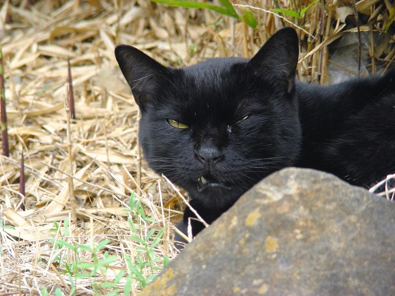 岩の向こうの黒猫1