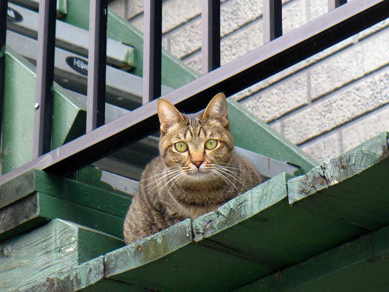 緑階段のキジトラ猫1