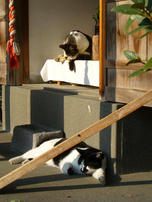 祠にいる猫たち1