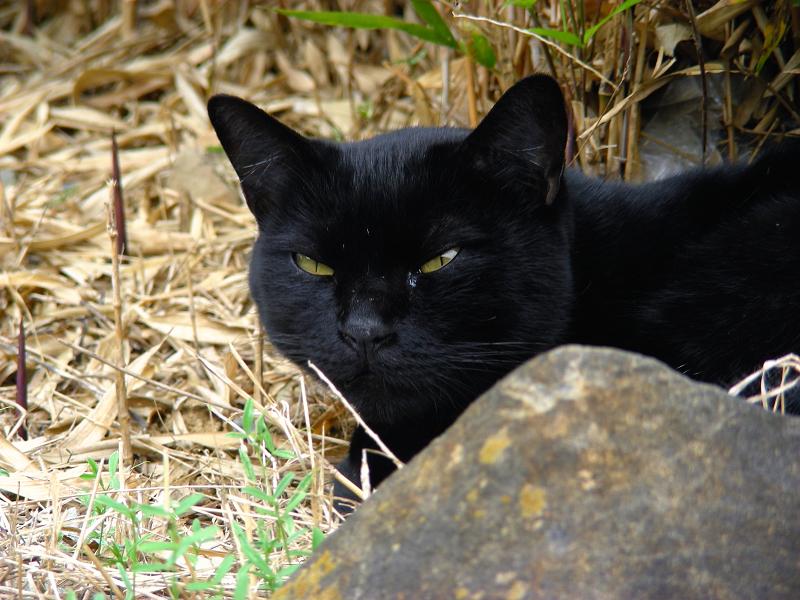 岩の向こうの黒猫2