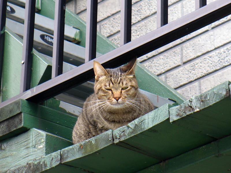 緑階段のキジトラ猫2