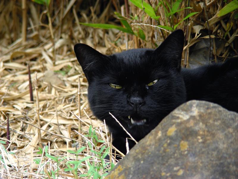 岩の向こうの黒猫3
