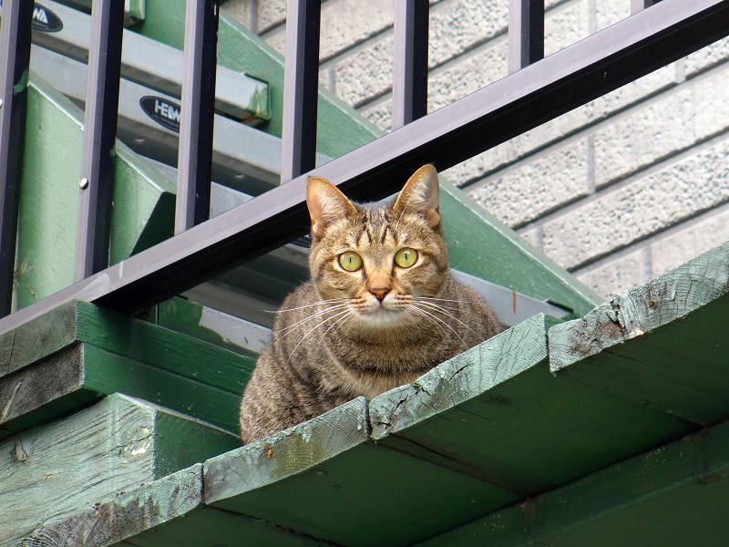 緑階段のキジトラ猫3