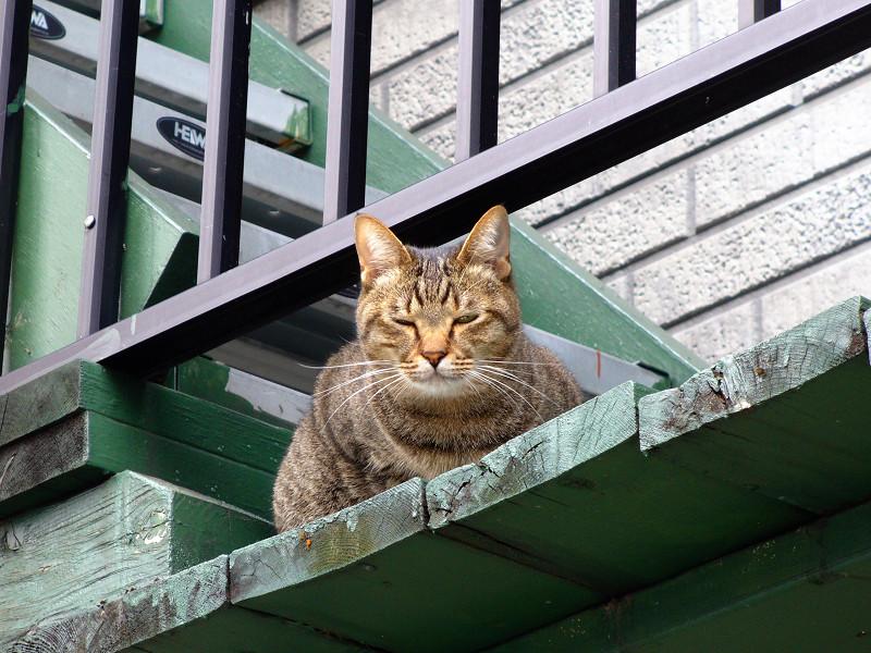 緑階段のキジトラ猫4