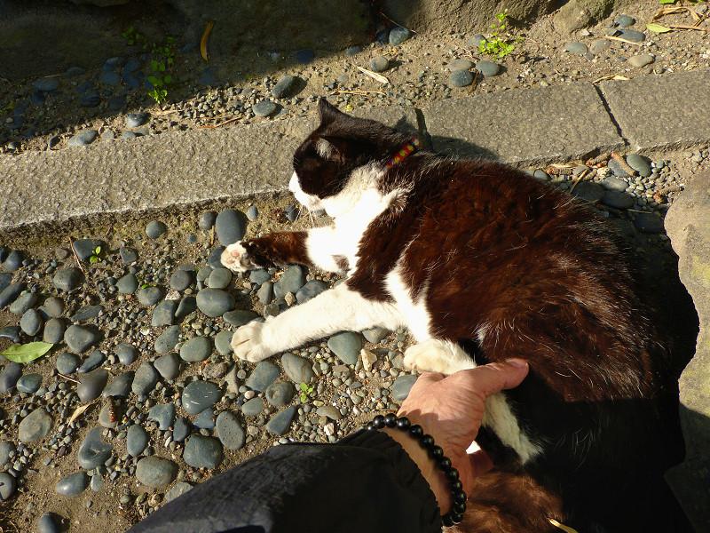 足で拒否する黒白猫1