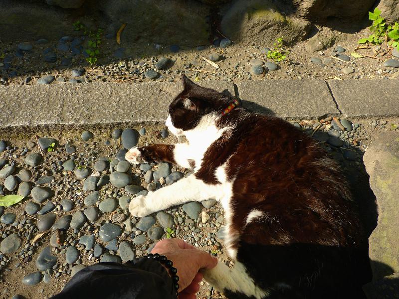 足で拒否する黒白猫3