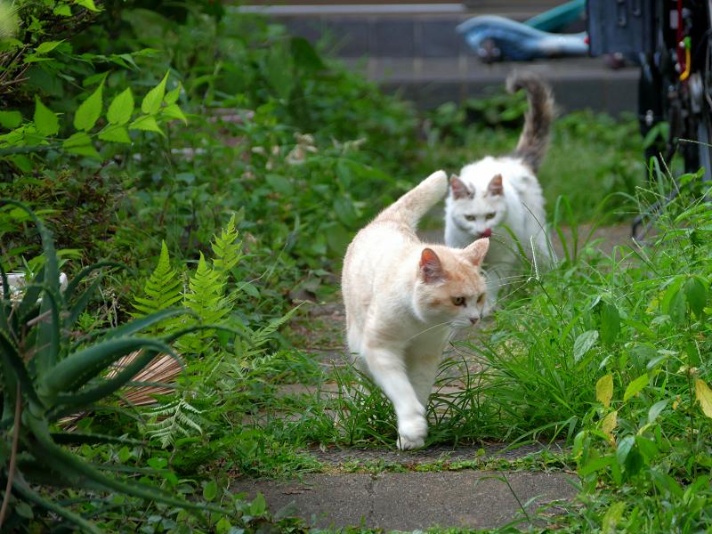 優雅に歩く猫たち1