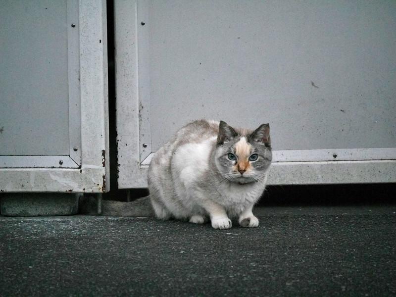 開き扉前の猫1