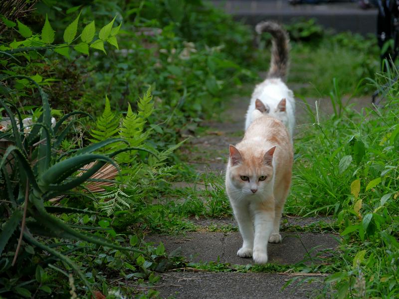 優雅に歩く猫たち2