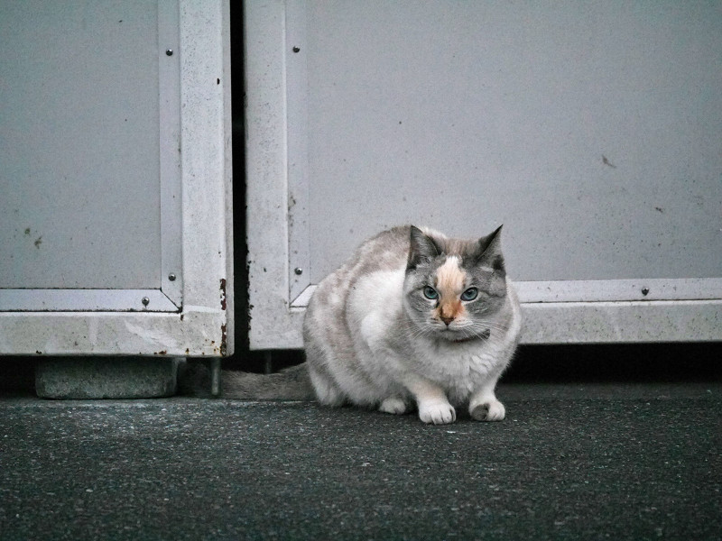 開き扉前の猫2