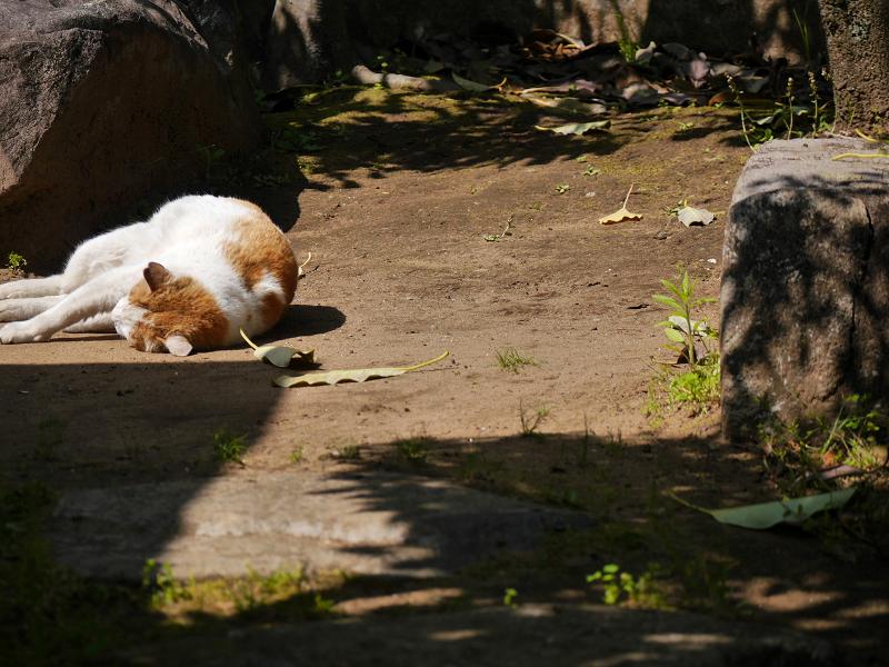 日向で転がり続ける茶白猫2
