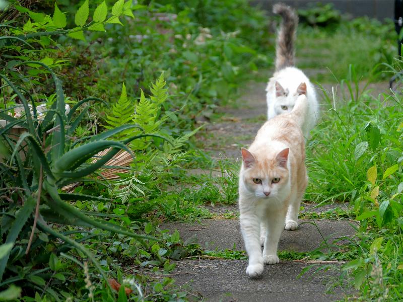 優雅に歩く猫たち3
