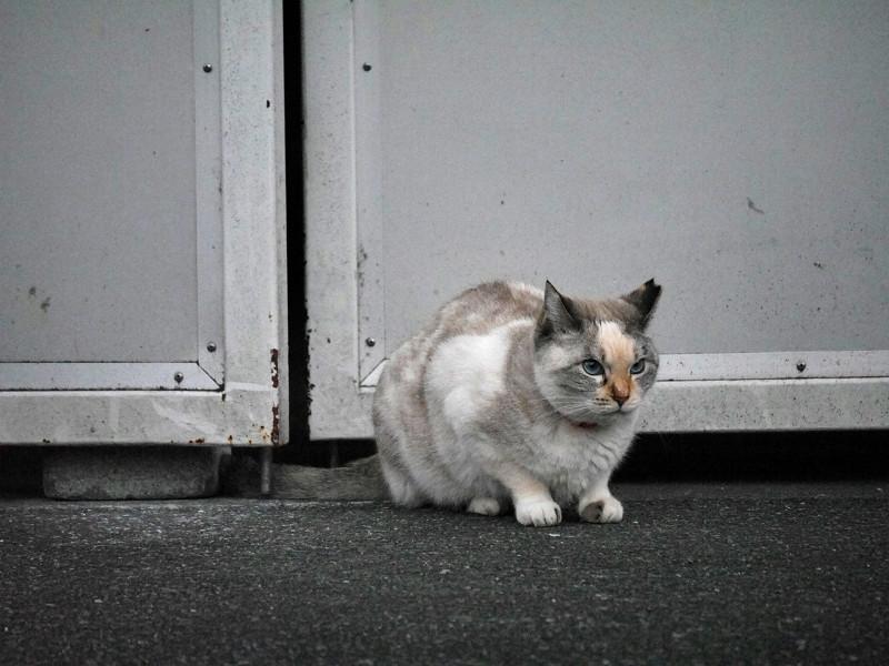開き扉前の猫3