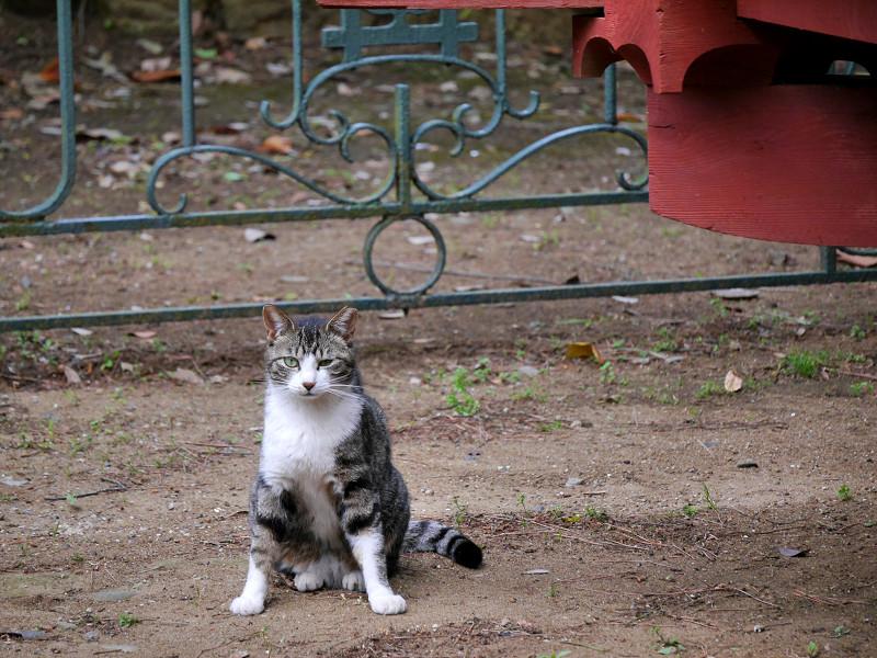 片目を瞑ってるキジ白猫3
