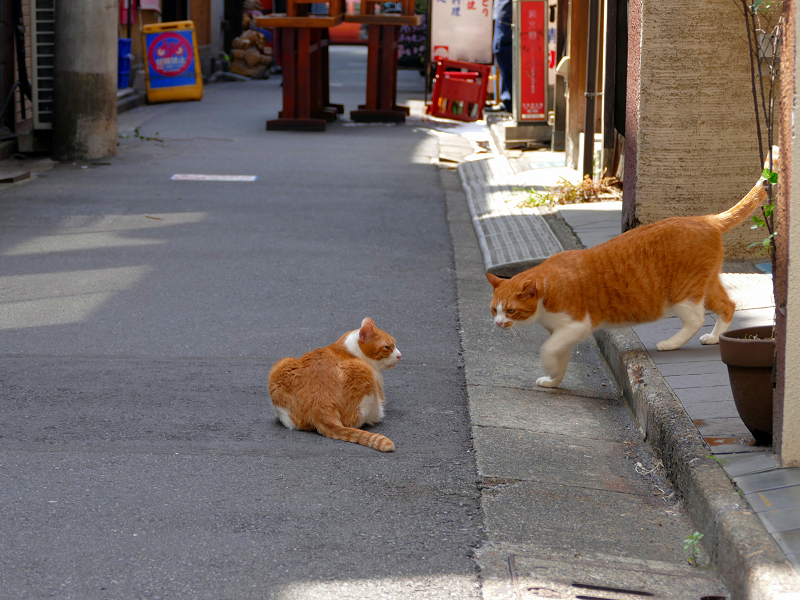 飲み屋街路地の茶白猫2匹2