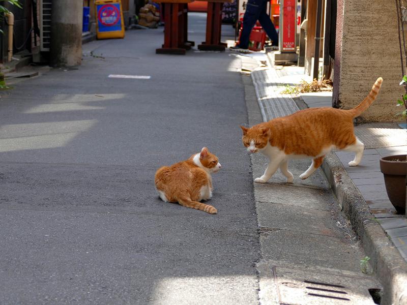 飲み屋街路地の茶白猫2匹3