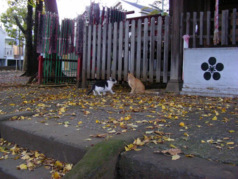 境内で遊ぶ猫たち2
