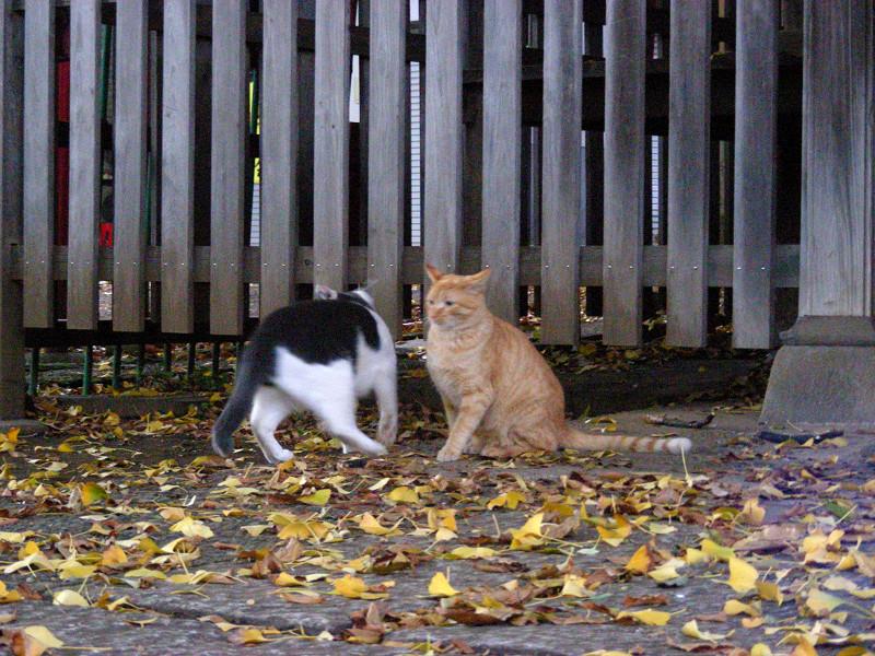 境内で遊ぶ猫たち3