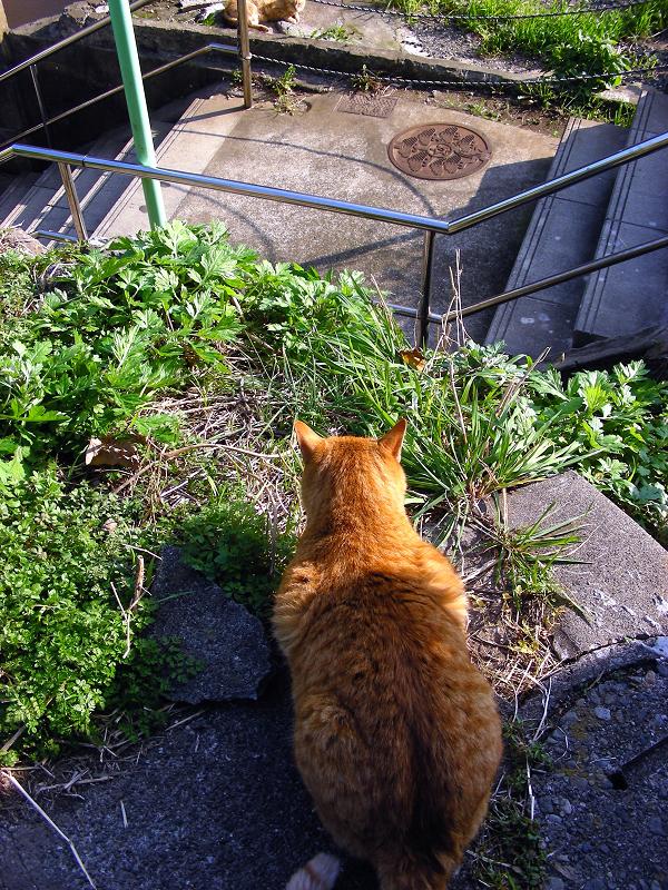 階段の途中で現れた茶トラ猫3