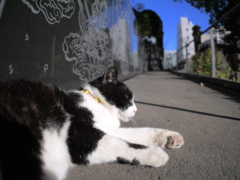 スロープで寝てる黒白猫1