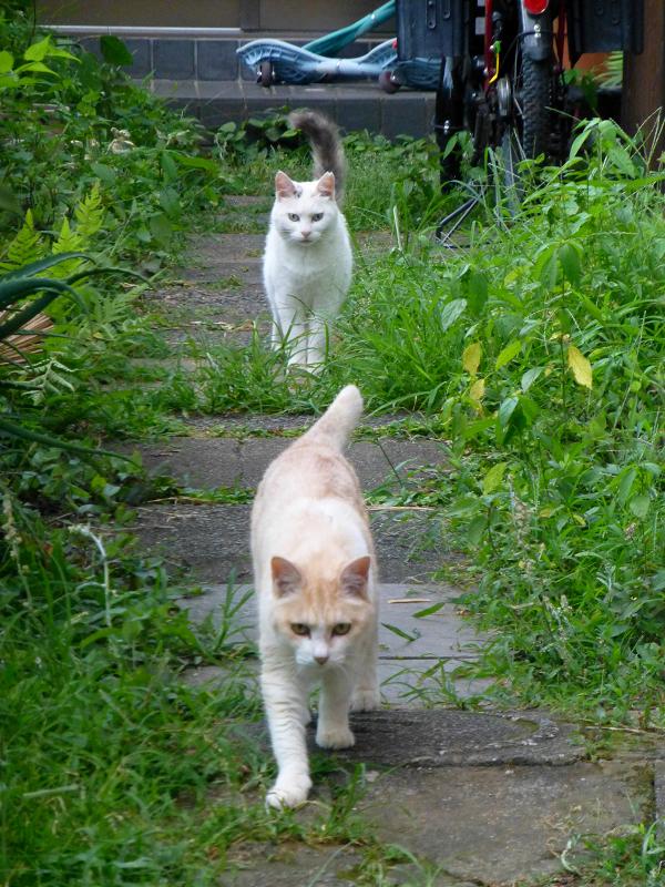 真っ直ぐ寄って来る猫たち1