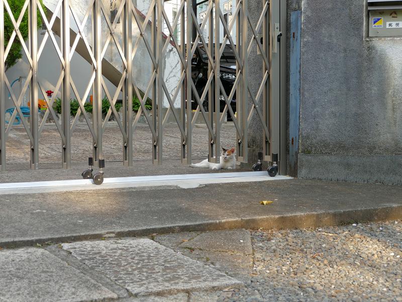 門扉の下にいる白三毛猫1