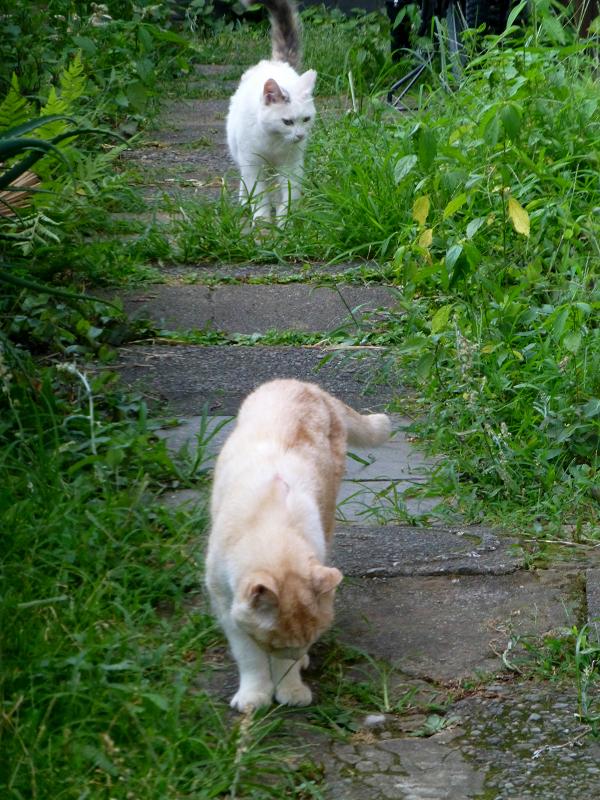 真っ直ぐ寄って来る猫たち2