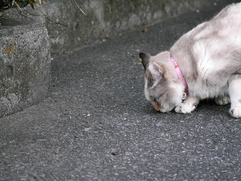 地面の匂いを嗅ぐ猫2