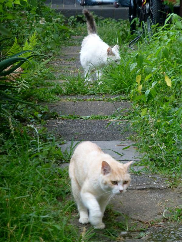 真っ直ぐ寄って来る猫たち3
