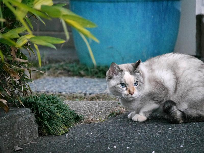 地面の匂いを嗅ぐ猫3
