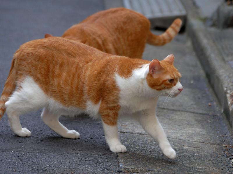 路地で動いてる茶白猫たち1