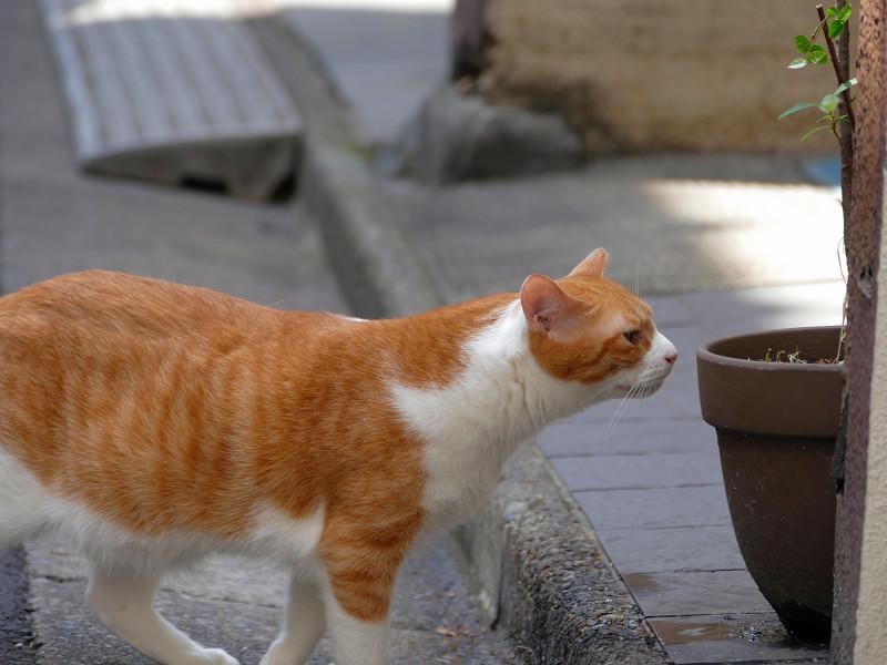 路地で動いてる茶白猫たち2