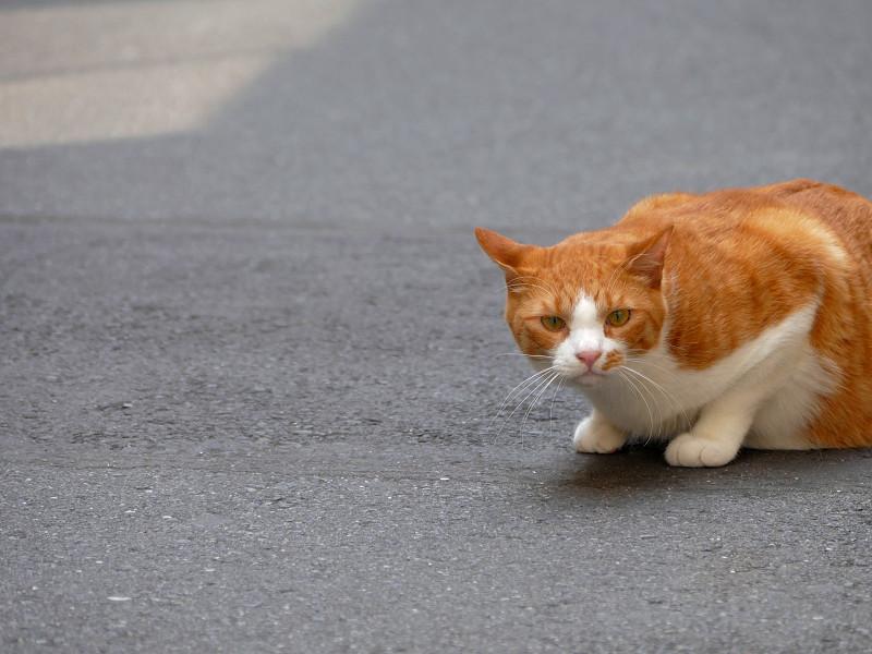 路地で動いてる茶白猫たち3