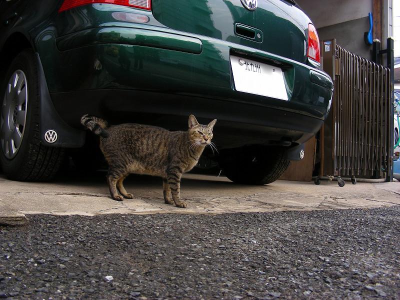 緑の車とキジトラ猫1