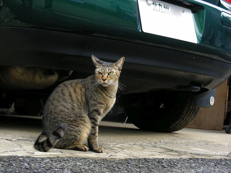緑の車とキジトラ猫2