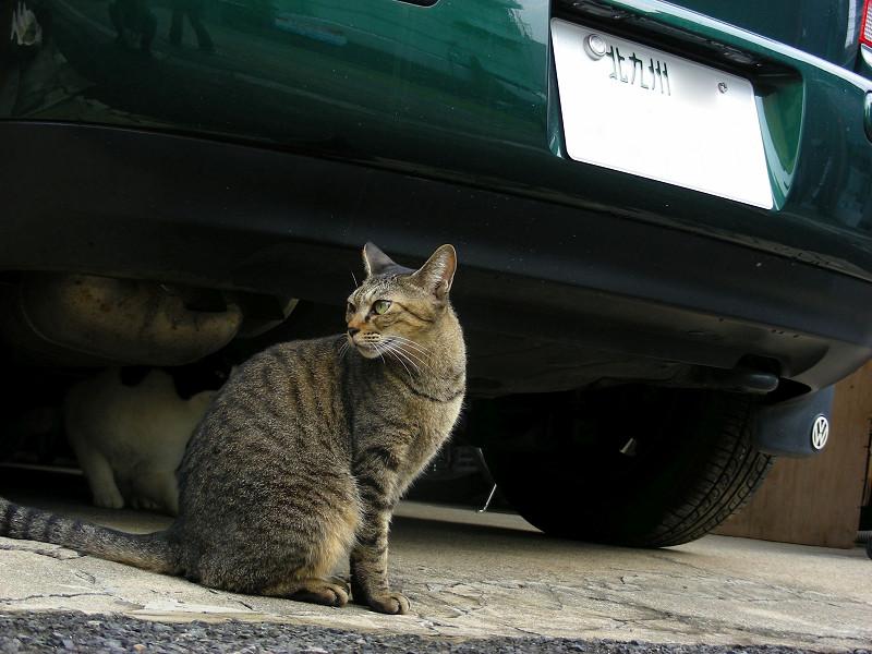 緑の車とキジトラ猫3