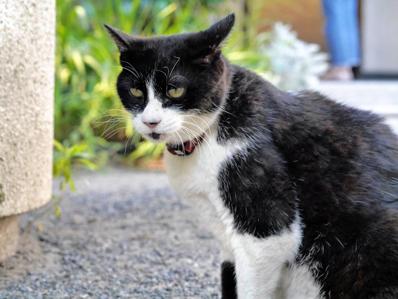 境内で座ってる黒白猫1