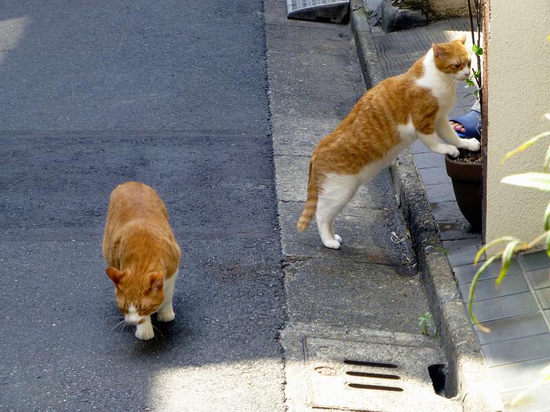 路地の茶白猫たち