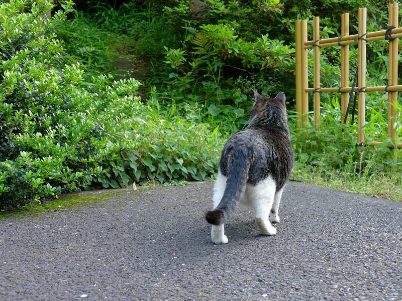 真剣に探してるキジ白猫1