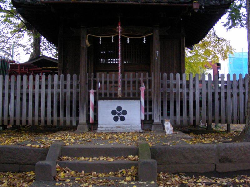 神社正面の茶白猫