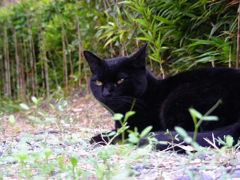 撫でられた黒猫1