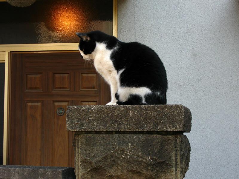 門柱の黒白猫1