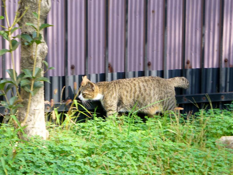 出会ってしまう猫たち1