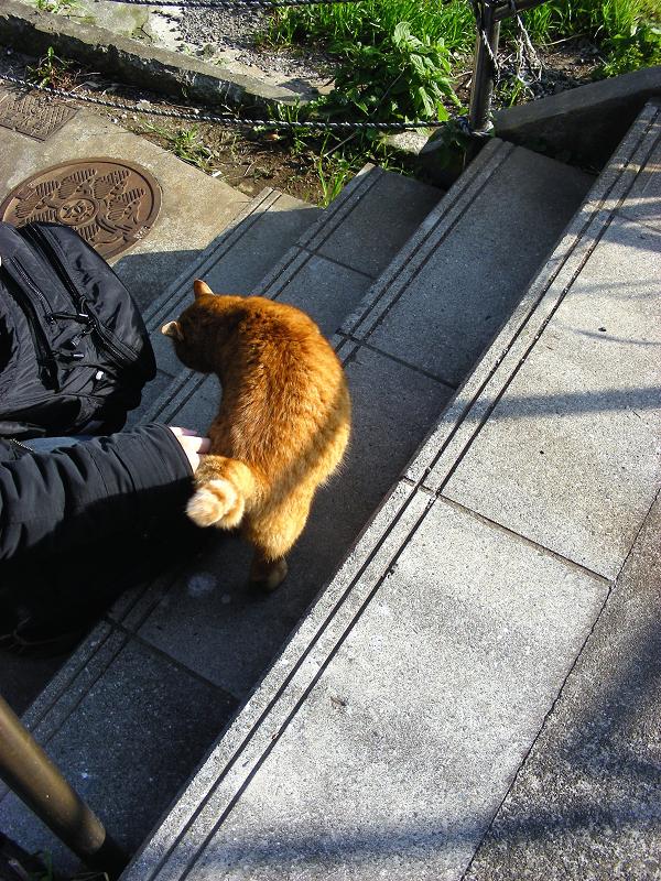 階段に出てきた茶トラ猫2
